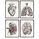 Medical Anatomy - Vintage Human Organs Wood Replica Wall Art Sign Plaque Set - Shabby Chic Photo Pictures Prints for Doctor Clinic, Dr Office - Gift for Nurse, Med Student, Cardiologist, Neurologist