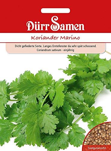 Koriander Marino | Koriandersamen von Dürr-Samen