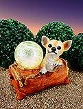 ABC Home Garden Gartendeko Dekofigur Chihuahua Gartenfigur Lichtsensor EIN-& Ausschalter, Mehrfarbig