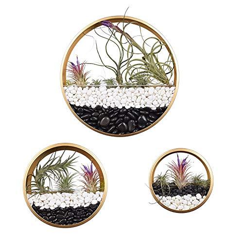 AJMINI Morden Ronde opknoping muur Vaas Glas Muur Planter, Indoor Decoratieve Hedendaagse Vaas Kruid Kleine Cactus Cirkel Muur Opknoping Goud, Maat S,M,L 3 Pack Set
