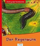 Der Regenwurm Bilderbuch