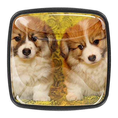 Home Modern Square Cabinet Knobs - 4 Pack - Kitchen Cupboard Furniture Cabinet Hardware Drawer Dresser Pull Puppies Welsh Corgi Pet Dog Two