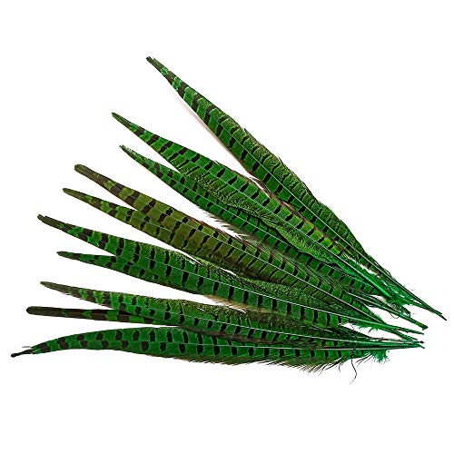 wanjin 10PCS green Natural Pheasant Feathers Pheasant Tails 14-16 inch(35-40CM)