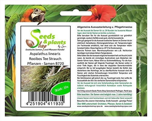 Stk - 10x Aspalathus linearis Rooibos Tee Strauch Pflanzen - Samen B720 - Seeds Plants Shop Samenbank Pfullingen Patrik Ipsa