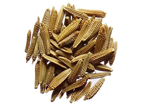 Pissenlit Dent de Lion - 0,20 grammes - Taraxacum Officinalis L. - Common Dandelion - SEM02