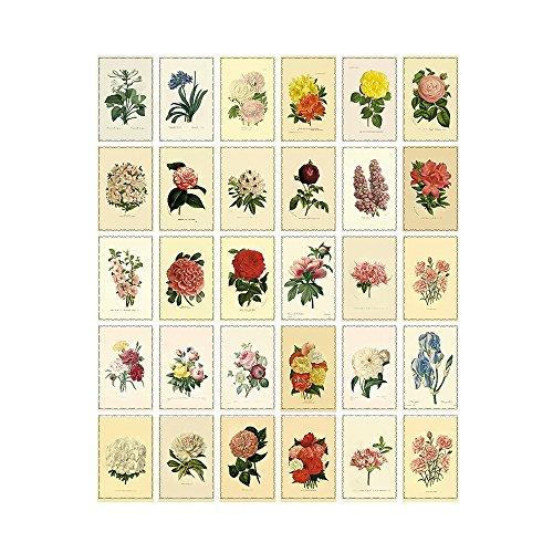 Zhi Jin Juego de 30 tarjetas postales vintage con diseño de flores y caja para coleccionar regalos