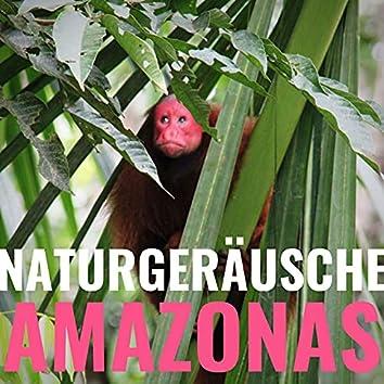 Naturgeräusche Amazonas: Unwetter in den Tropen zum Einschlafen