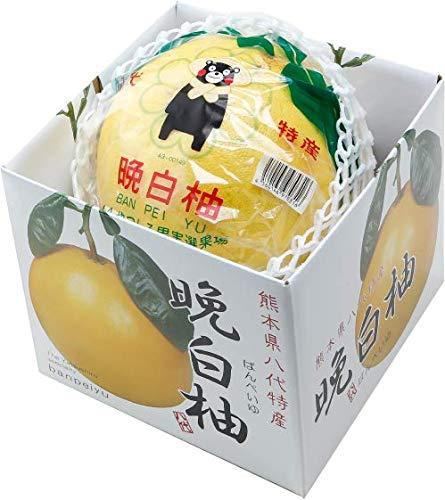 みかん 晩白柚 ばんぺいゆ 赤秀 特大玉 2Lサイズ 1玉 2kg 熊本県産 JAやつしろ 化粧箱入り 柑橘 蜜柑