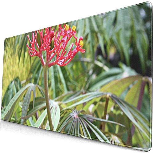 Gaming Extended Mouse Pads mit Rutschfester Gummibasis Blume und Blättern der Pflanze Jatropha seziert Multifida 30X80 cm