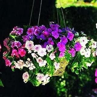 catharanthus roseus seeds sale