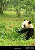 Notebook: Großes Panda Notizbuch A4, kariert. Nachhaltig & klimaneutral.