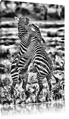 Pixxprint kämpfende Zebras als Leinwandbild | Größe: 80x60 | Wandbild| Kunstdruck | fertig bespannt