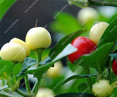 150pcs/sac exotique cerise poivre semences importées Balcon délicieux Chili Chili Bonsai Jardin potager des plantes ornementales pour la fleur 1
