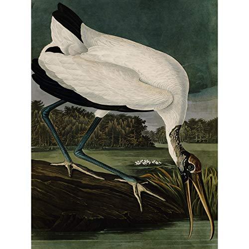 Audubon Vogels Hout Ibis Schilderen Omlijst Muur Kunst Print 18X24 In