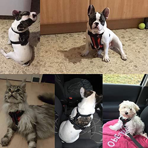 Arnés para Perros para el Coche Cinturón de Seguridad de Coche ...