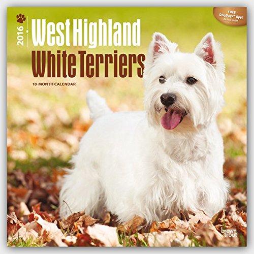 West Highland White Terriers 2016 - Westies - 18-Monatskalender mit freier DogDays-App: Original Bro