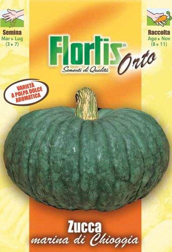 Flortis 4355370 Kürbis Marina Di Chioggia (Kürbissamen)