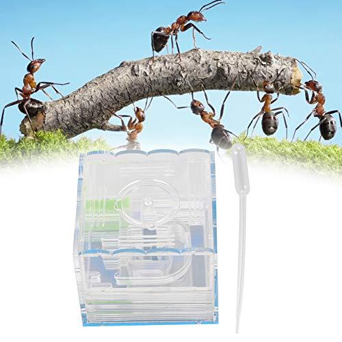 【𝐖𝐞𝐢𝐡𝐧𝐚𝐜𝐡𝐭𝐞𝐧】Gute Dichtungswirkung Ameisenwerkstatt, Ameisennester Acryl Professionelles Haustier Ameisenhaus mit Fütterungsbereich Acrylameisenhaus, Tiere für Ameisen Haustiere Insekten