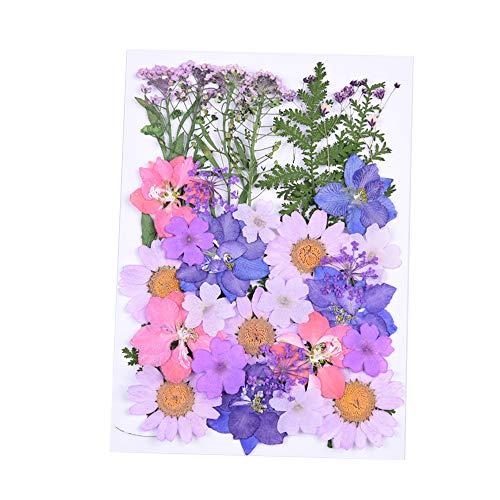 Bestine Flores prensadas mezcladas, flores secas naturales, colección de decoraciones florales para...