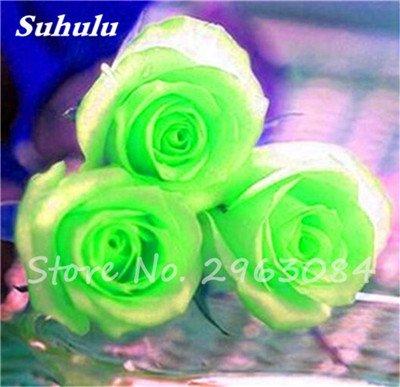 Livraison gratuite 100 pcs / sac Rose Graines, Graines de fleurs Rose, Graines Bonsai fleurs, plantes, légère odeur de croissance naturelle pour jardin 20