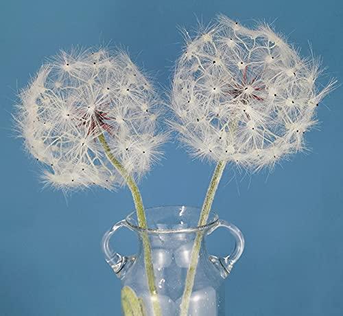 Artificial Dandelion Flower, Faux Dandelion Flowers for Home Decoration (2 Pcs) (White, Flower Dia 8 Inch)