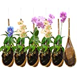 PANWA Handmade 100% Thai Bamboo Woven 4 Inch Hanging Orchid Basket - Set of 6 Multi-Purpose Bird Nest Style Plant Hangers for Trellis or Gazebo - Indoor / Outdoor Flower Planter (Natural Brown)