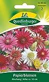 Papierblumen, Xeranthemum annuum, ca. 60 Samen