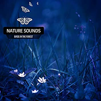 Nature Sounds Birds In The Forest (Rain)