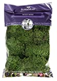 Supermoss Mood Moss Preserved Natural Green 1200cuin...