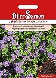 Dürr Samen 1301 Leberbalsam Blausternchen (Leberbalsamsamen) [MHD 12/2019]