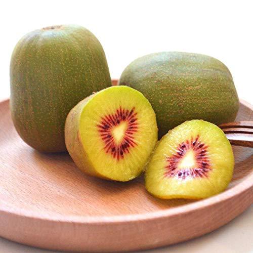 AIMADO Samen-100 Stück Kiwi Samen Bio Obst Saatgut Vitaminreich, saftig, lecker, winterharte, mehrjährige Kletterpflanze für Balkon, Terasse oder Gewächshaus