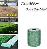 Bermuda Grass Seeds Review and Comparison