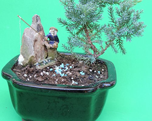 Fisherman with Dangling Fish Juniper Bonsai Tree Sold by JM Bamboo