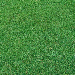 緑肥 牧草 芝 種 ケンタッキーブルーグラス ムーンライトSLT BLG539 小袋(60ml)