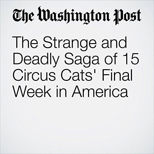 The Strange and Deadly Saga of 15 Circus Cats' Final Week in America copertina