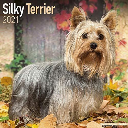 Silky Terrier Calendar 2021 - Dog Breed Calendar - Wall Calendar 2020-2021