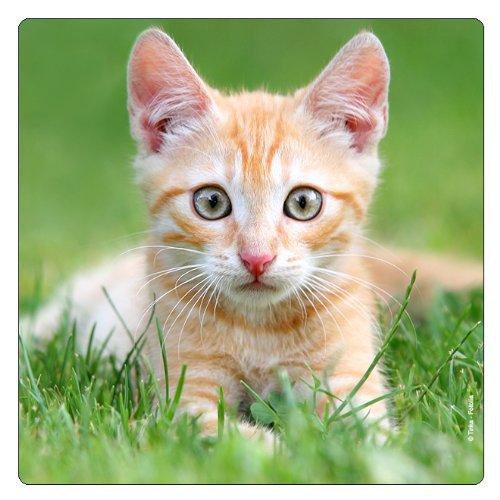 Réfrigérateur magnet petit tigre-chat avec grands yeux ronds \