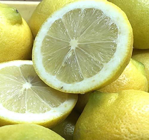国産 レモン 訳あり 10kg 国産 広島 瀬戸田産 防腐剤不使用 ノ−ワックス