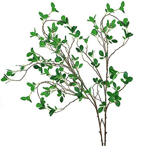 planta ficus natural fabricante Ollain