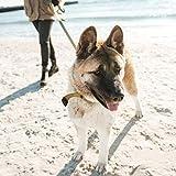 Gelenk-Ergänzungsfutter für Hunde – MaxxiFlex Plus – Hunde Gelenke – Fortschrittliche Formel – Glucosamin HCL, Chondroitin-Sulfat, MSM, Hyaluronsäure, Teufelskralle, Bromelain, Gelbwurz – Linderung Von Arthritisschmerzen – Beste Hüftunterstützung Für Hunde – Hunde-Hüftdysplasie – Alle Rassen Und Größen – 120 Hochwertige Kaubare Tabletten – Geschmacksgarantie - 8