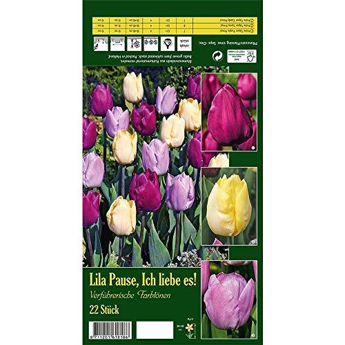 Florado 22x Tulpen-Mix Blumenzwiebeln 'Lila Pause, Ich liebe es!', Zwiebelblumen, Garten, Blumen Schnittblumen, Bienen Insekten, Größe 12/+