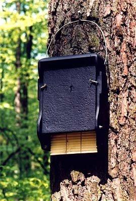 1FF Bat Box flach