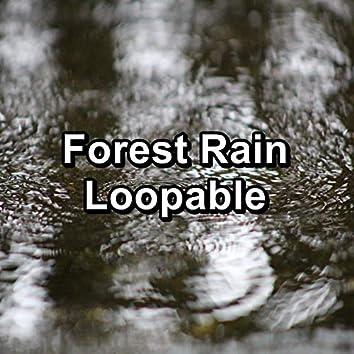 Forest Rain Loopable