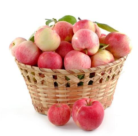 bonsaï nain 50 graines cueillir des fruits délicieux dans votre jardin facile -growing Bonsai FruitFree Livraison 1