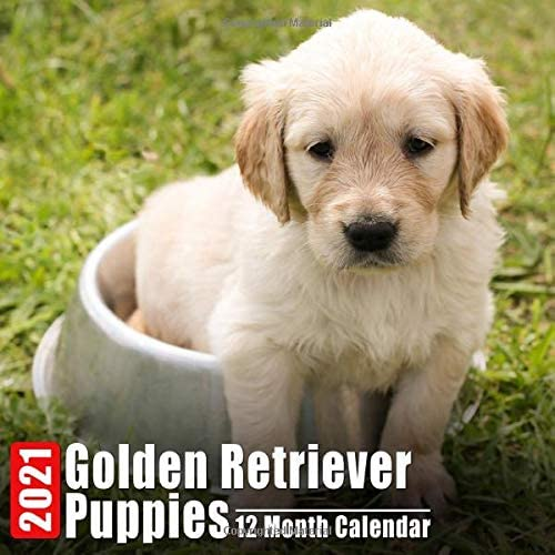 Calendar 2021 Golden Retriever Puppies Cute Golden Retriever Puppy Photos Monthly Mini Calendar product image