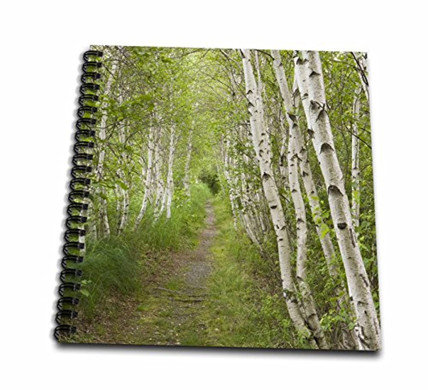 3dRose db_90692_2 Paper Birch Trees, Path, Acadia Np, Maine-Us20 Jmo0986-Jerry and Marcy Monkman-Memory Book, 12 by 12-Inch