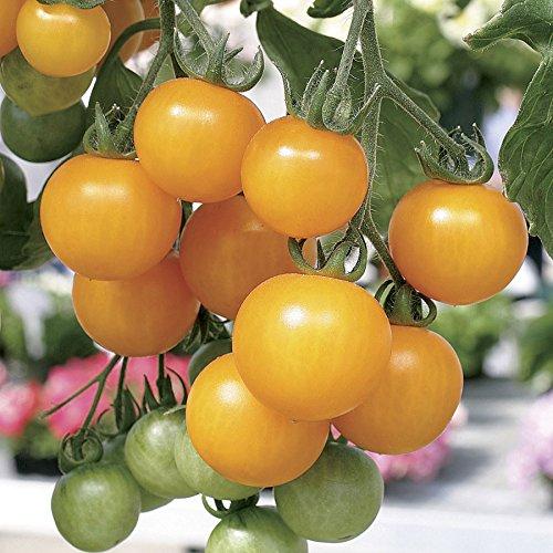 Nouvelle arrivée! 10 Seed Pcs / Paquet Jaune Cerise Balcon Jardin Fruit Bonsai Plante en pot vert Bonsai Cerise Fruits semences, # 5EMCOC