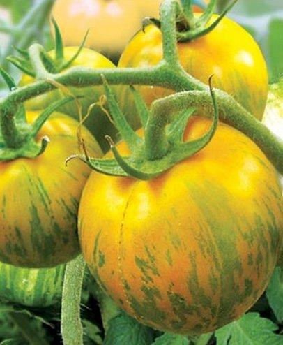Tomate Sibirische Malachit - 10 Samen