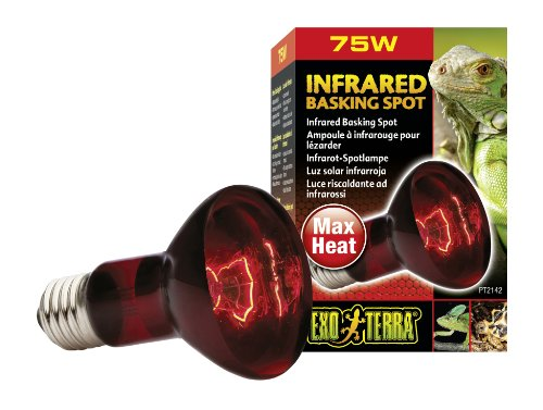 Exoterra Éclairage pour Reptiles Lampe Infrared Basking Spot 75 W