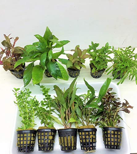 10 Töpfe Aquarienpflanzen Set Wasserpflanzen ideal für den Anfänger